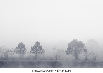 Tree in the mist, black and white