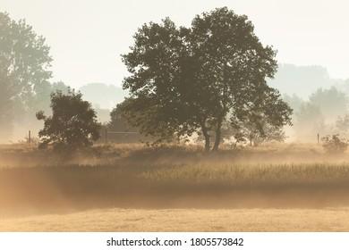 Tree in the mist near Wetter, Flanders, Belgium