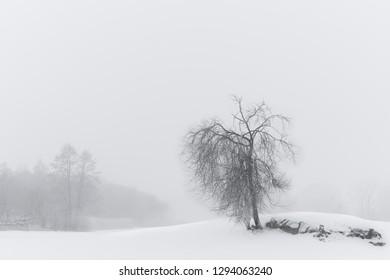 Tree in moody foggy winter landscape