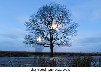 Tree with moonlight in heath landscape Dwingelderveld, the Netherlands