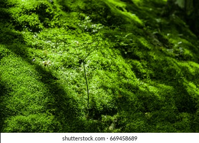 Tree and mosses on a slope