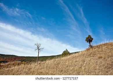 Tree in mountain