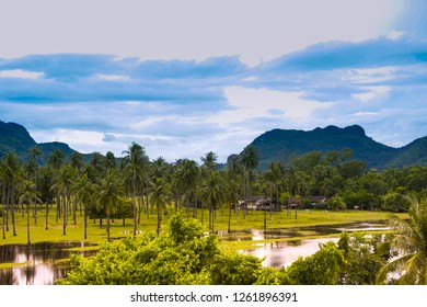 Tree and Mountain background, Nutural