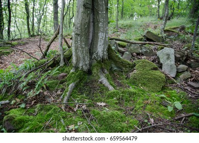 Tree in mountain green forest.