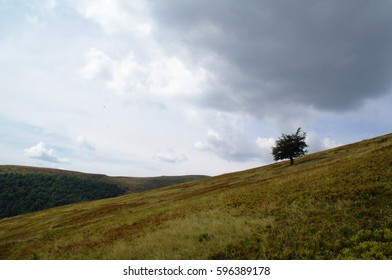 Tree in Mountains