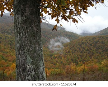 Tree and mountains with fog