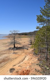 Tree in the mudflats of Enid Lake in Mississippi