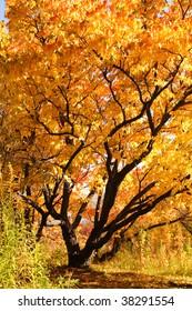 tree with multi-coloured autumn foliage