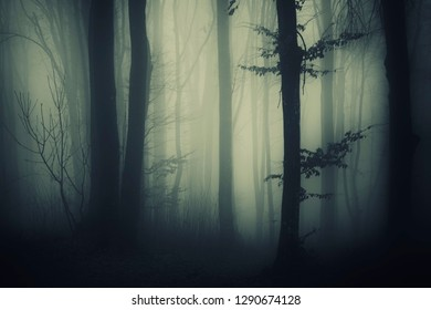 tree in mysterious forest, dark fantasy landscape