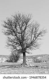 tree nature blackandwhite winter cold