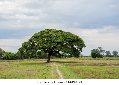 tree, nature, green, summer, background, season, landscape