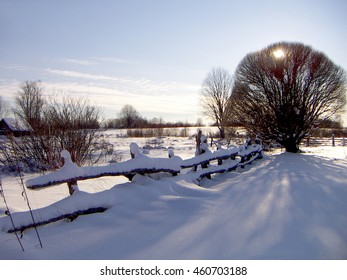 The tree near to a fence rejects a blue shade on sparkling snow.