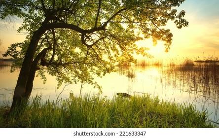 Tree near lake during sunset. Beautiful natural landscape