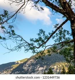 Tree near Oberammergau