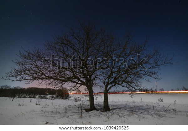 A tree near the road against the background of the night starry sky in winter.