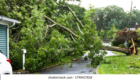 Tree from neighbors property falls during tropical storm Isaias landing on house, covering driveway and knocks down power lines.