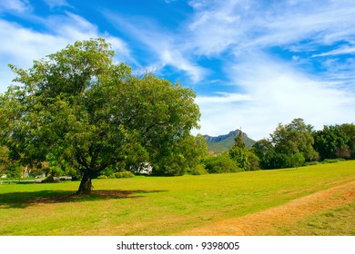 Tree next to country road - with background of majestic mountains. Shot in August, Stellenbosch, South Africa.