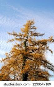 Tree in November whit a blue skay