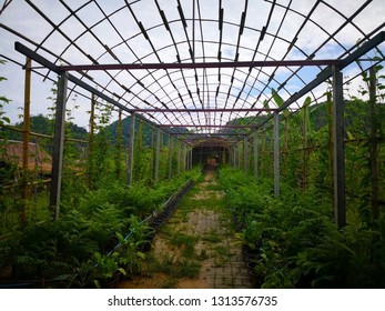 A tree nursery that has recently been built into a bamboo structure tunnel. With beams and walkways made of cement. Selective focus and copy space.
