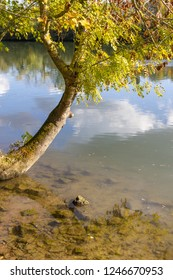 Tree at Oise river in Auvers-sur-Oise village, France