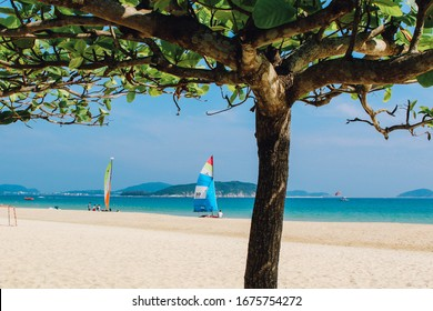 tree on a background of blue sea and sand in the background a sailboat and the island of yalong bay sanya