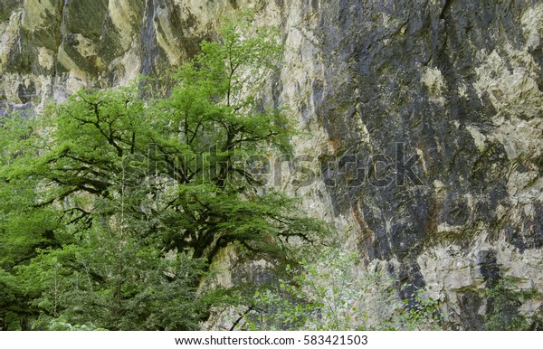 the tree on the background of rocks