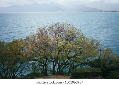 The tree on the background of the sea. A deciduous tree grows on a rock. Green tree against the sea.