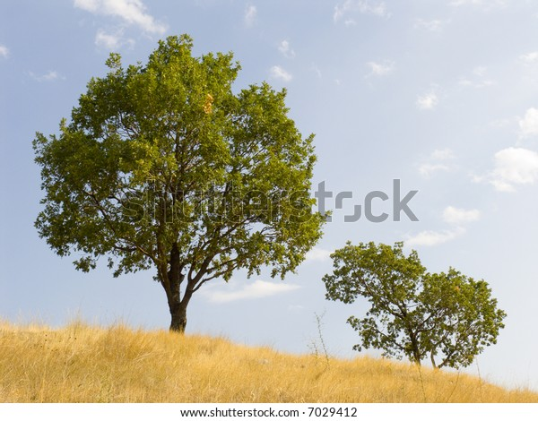 Tree on a background of the sky with a yellow grass in the foreground