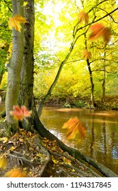 Tree on the bank of river in the autumn