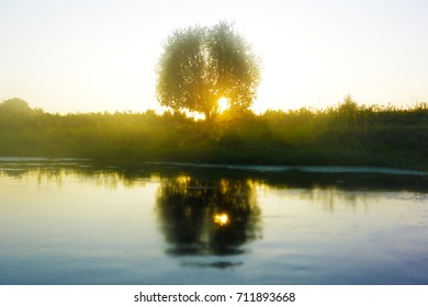 tree on the Bank of the river in the last rays of the setting sun