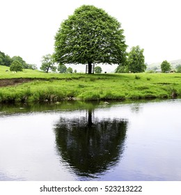 Tree on the banks of the River Hodder in the Forest of Bowland near Clitheroe Lancashire.