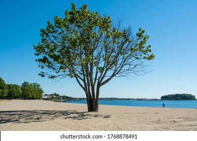 A tree on the beach on a beautiful summer day by the Long Island Sound at Calf Pasture Beach in Norwalk, Connecticut USA
