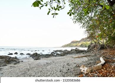 tree on beach, photo as a background taken in Nicoya, Costa rica central america , montezuma beach
