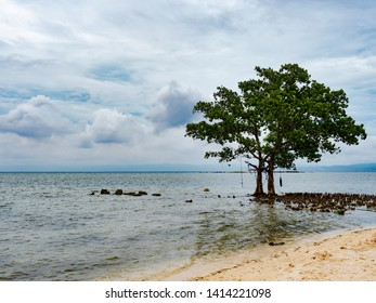 Tree on the beach in Tinito, a village in Maasim in the Sarangani province on Mindanao, the southernmost large island in the Philippines.