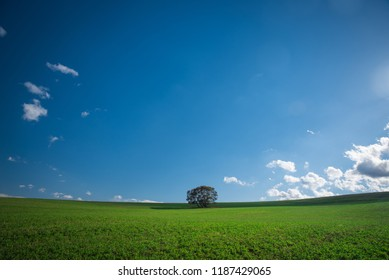 Tree on beatiful green meadow under blue sky. Wallpaper photo