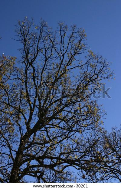 Tree on a blue sky.