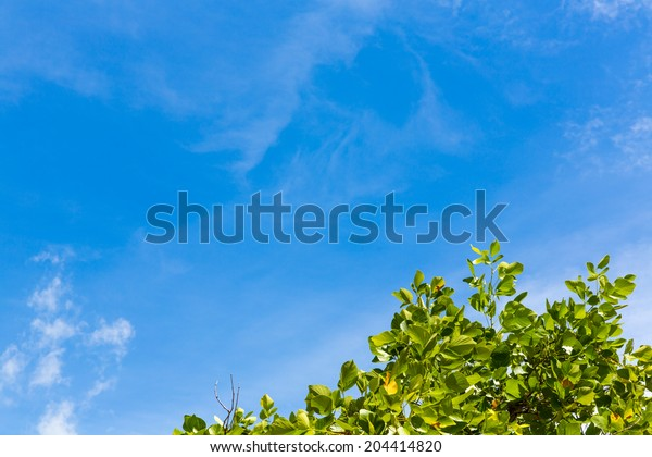 Tree on blue sky concept background