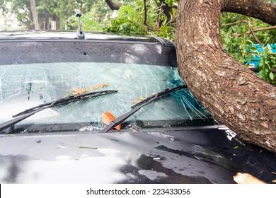 tree on a car after hurricane (damaged car)