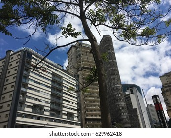 A tree on the city