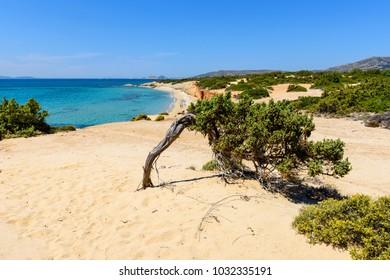 Tree on cliff and view of sea with Aliko beach on Naxos island. Cyclades, Greece