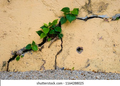 The tree on the crevice of the cement wall.
