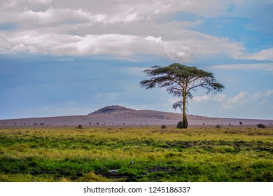 A tree on dry African savanna grassland