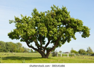 tree on the field against blue sky background