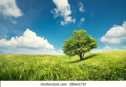 Tree on the field. Beautiful summer landscape