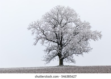 Tree on a field during wintertime