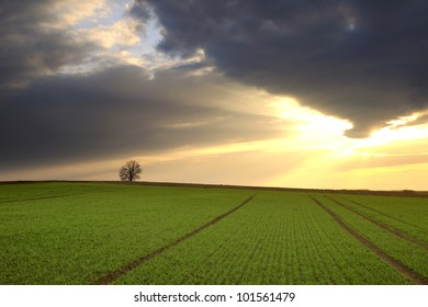 Tree On a Field Under Cloudy Sky With Outgoing Sun, Czech Republic