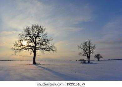 Tree on a field. Winter season in Europe, Lithuania. - Shutterstock ID 1923151079