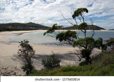 Tree on Fingal Bay Beach Australia