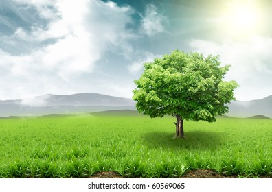 Tree on a grassy meadow