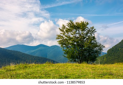 tree on the grassy meadow in mountains. early autumn countryside with beautiful cloudscape